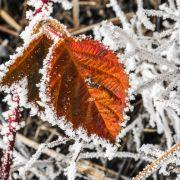 -19 Grad! Polarkälte lässt Deutschland zittern (Foto)