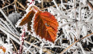 Die Kältewelle hat Deutschland weiterhin fest im Griff. (Foto)
