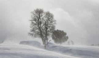 Droht Deutschland ein Arctic Outbreak? (Foto)