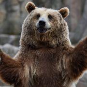 Vermisster Junge (3) soll dank Bär im Wald überlebt haben (Foto)