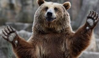"""Ein Junge, der zwei Tage lang im Wald verschollen war, behauptet, """"dass er mit einem Bären abgehangen hätte."""" (Symbolbild) (Foto)"""