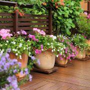 Killer-Gärtner verscharrte Missbrauchsopfer in Blumentöpfen (Foto)