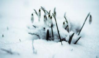 Kommt jetzt der Frühling? (Foto)