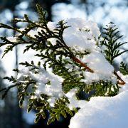Azorenhoch bläst Winterkälte weg! SO warm wird es diese Woche (Foto)
