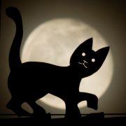 Nicht verpassen! Gigantischer Super-Wolfsmond erhellt die Nacht (Foto)