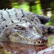 Zwei Fischer in Indonesien von Krokodilen getötet (Foto)