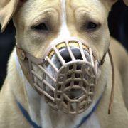Ein Brite wurde von zwei Staffordshire Terriern angegriffen.