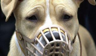 Ein Brite wurde von zwei Staffordshire Terriern angegriffen. (Foto)