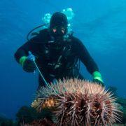 Gigantisches Unterwasser-Kondom gesichtet - was ist DAS für eine Kreatur? (Foto)