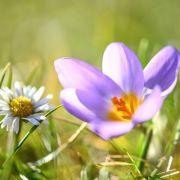 "Angrillen im Februar? Hoch ""Dorit"" sorgt für Frühlings-Gefühle (Foto)"