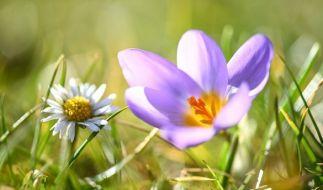 """Hoch """"Dorit"""" lässt den Frühling bereits im Februar 2019 in Deutschland einziehen. (Foto)"""