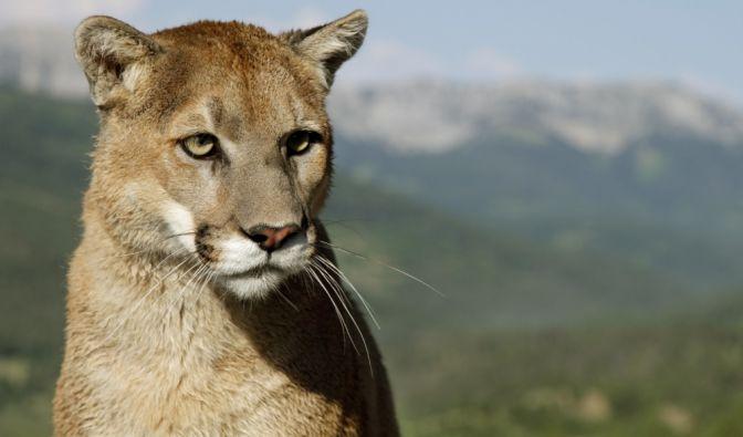 Tier-Attacke in Colorado