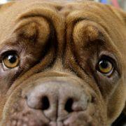 Brutal missbraucht! Hund muss eingeschläfert werden (Foto)