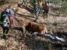 In Hessen führt ein Pferd die Polizei zu versteckten Waffen. (Foto)