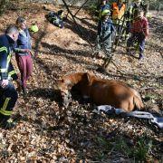 Pferd versinkt in Tümpel - und führt Polizei so zu Waffen im Matsch (Foto)
