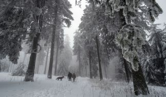 Zur Strafe soll eine russische Mutter ihr Kind im Wald ausgesetzt haben (Symbolbild). (Foto)