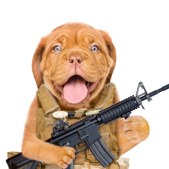 Hund schießt mit Gewehr auf Jäger (Foto)
