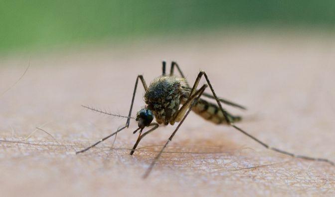 Mücken-Horror 2019