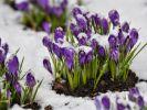 Nach dem Schnee soll endlich der Frühling kommen. (Foto)