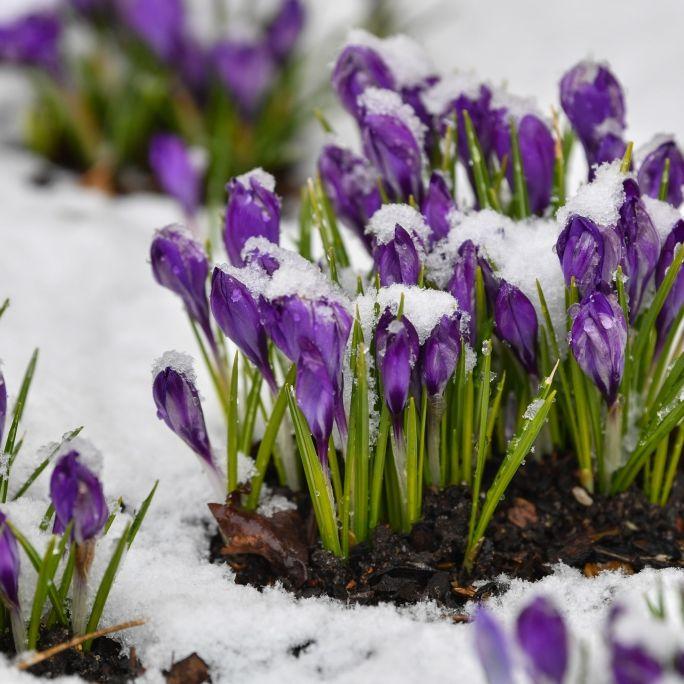 HIER schlägt der Winter nochmal richtig zu (Foto)