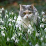 Auf Zypern hatte eine Katze in Not den richtigen Riecher und wurde bei der örtlichen Polizei vorstellig.