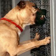 Hund beißt Jungem (2) Loch in die Wange (Foto)