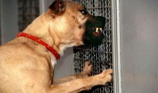 Ein Hund biss in Hameln einem Jungen ein Loch in die Wange. (Foto)