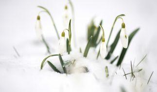 Deutschland muss sich an Ostern offenbar auf einen Temperatursturz einstellen. (Foto)