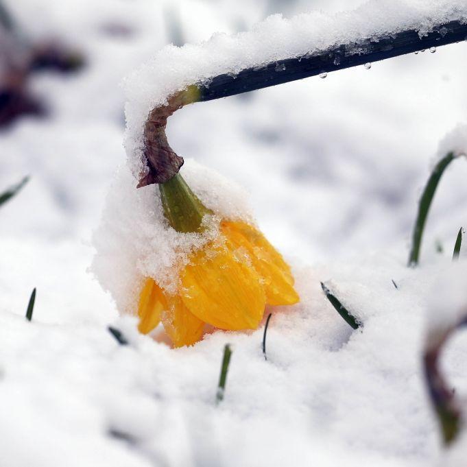 Bis zu 30 Zentimeter! Heftige Schneefälle bedrohen den Süden (Foto)