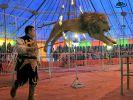 Tier-Angriff im Zirkus