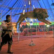 Zuschauer geschockt! Löwe verbeißt sich in Dompteur (Foto)