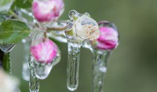 Kommt jetzt der Winter zurück? (Foto)