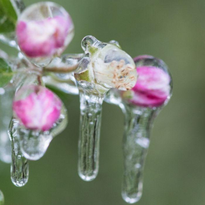 Kälte-Hammer bringt Frost und Schnee! Kommt der Winter zurück? (Foto)