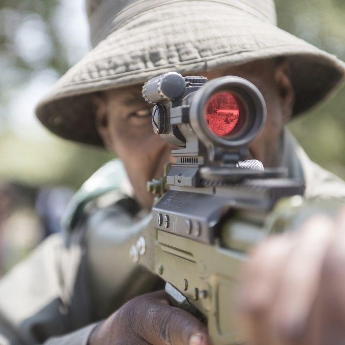 Wilderer von Elefanten zerquetscht und von Löwen gefressen (Foto)
