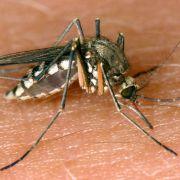 Gefahr durch Mückenstiche! Virus-Seuche auf dem Vormarsch (Foto)