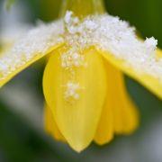 Schnee und Glätte! Kalte Kathi kühlt Deutschland kräftig runter (Foto)
