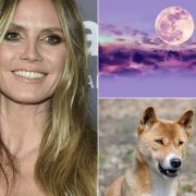Heidi Klum: Baby-Statement! // Rosa Vollmond über Deutschland // Schädelbruch! Kleinkind von Dingo zerfleischt (Foto)