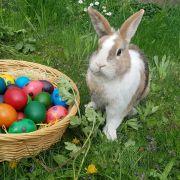 Was passiert mit Tiergeschenken nach der Festtagsfreude? (Foto)