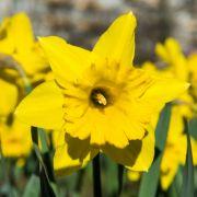 Vermiest uns DIESES Wetterphänomen den Mittfrühling? (Foto)