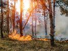 Die Waldbrandgefahr in Deutschland steigt! (Foto)