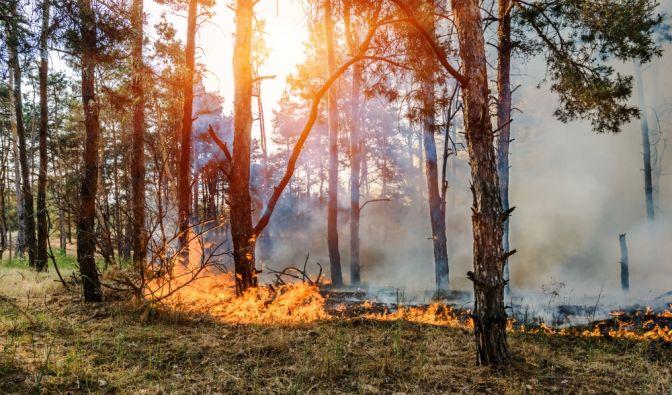 Waldbrandgefahr in Deutschland 2019