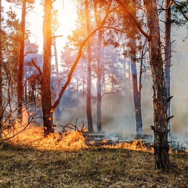 100 Hektar stehen in Flammen! Waldbrand in Lieberoser Heide wütet weiter (Foto)