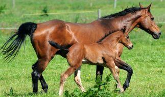 Tierquäler haben sich an Pferden in Thüringen vergangen. (Foto)