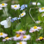 Blumenwiesen statt Ackerfläche