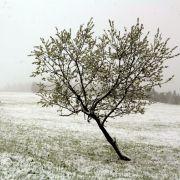 Kälte-Kracher? Schnee, Glätte und Frost verhageln das Wochenende! (Foto)