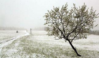 Ein für Mai eher ungewöhnlicher Anblick - eine geschlossene Schneedecke. (Foto)