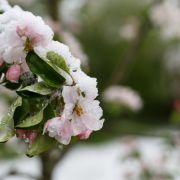 Bibber-Wetter in Deutschland! Bringt die Kalte Sophie den Winter zurück? (Foto)