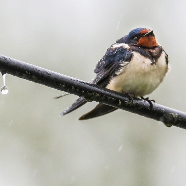 Schnee und Dauerregen! HIER wird's am Wochenende kalt (Foto)