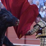 Matador trocknet sterbendem Stier die Tränen, bevor er ihn killt (Foto)