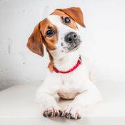 Hund lebendig gehäutet! Video zeigt grauenhafte Verletzungen (Foto)